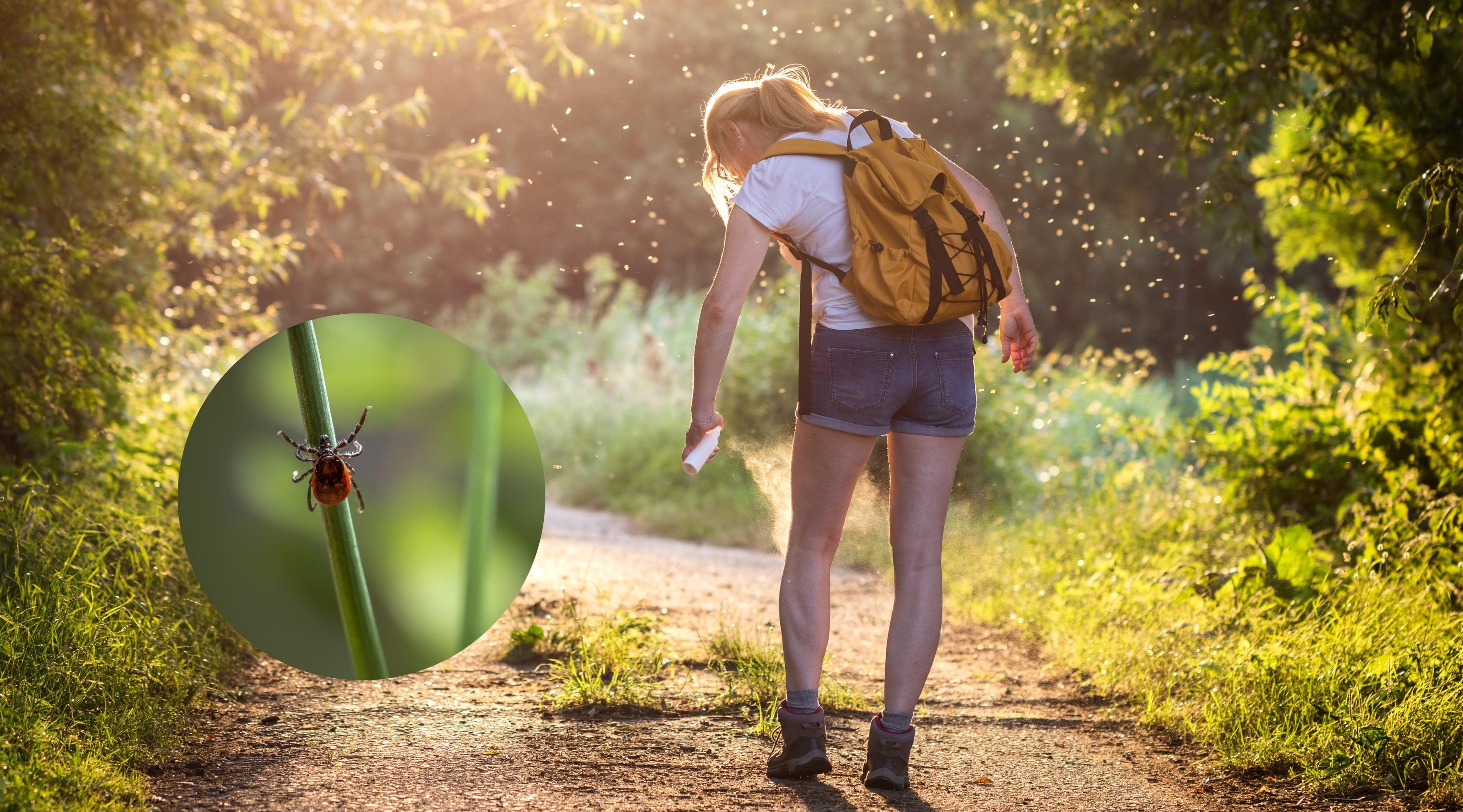 Naturligt mygg- och fästingmedel – så enkelt blandar du ett giftfritt