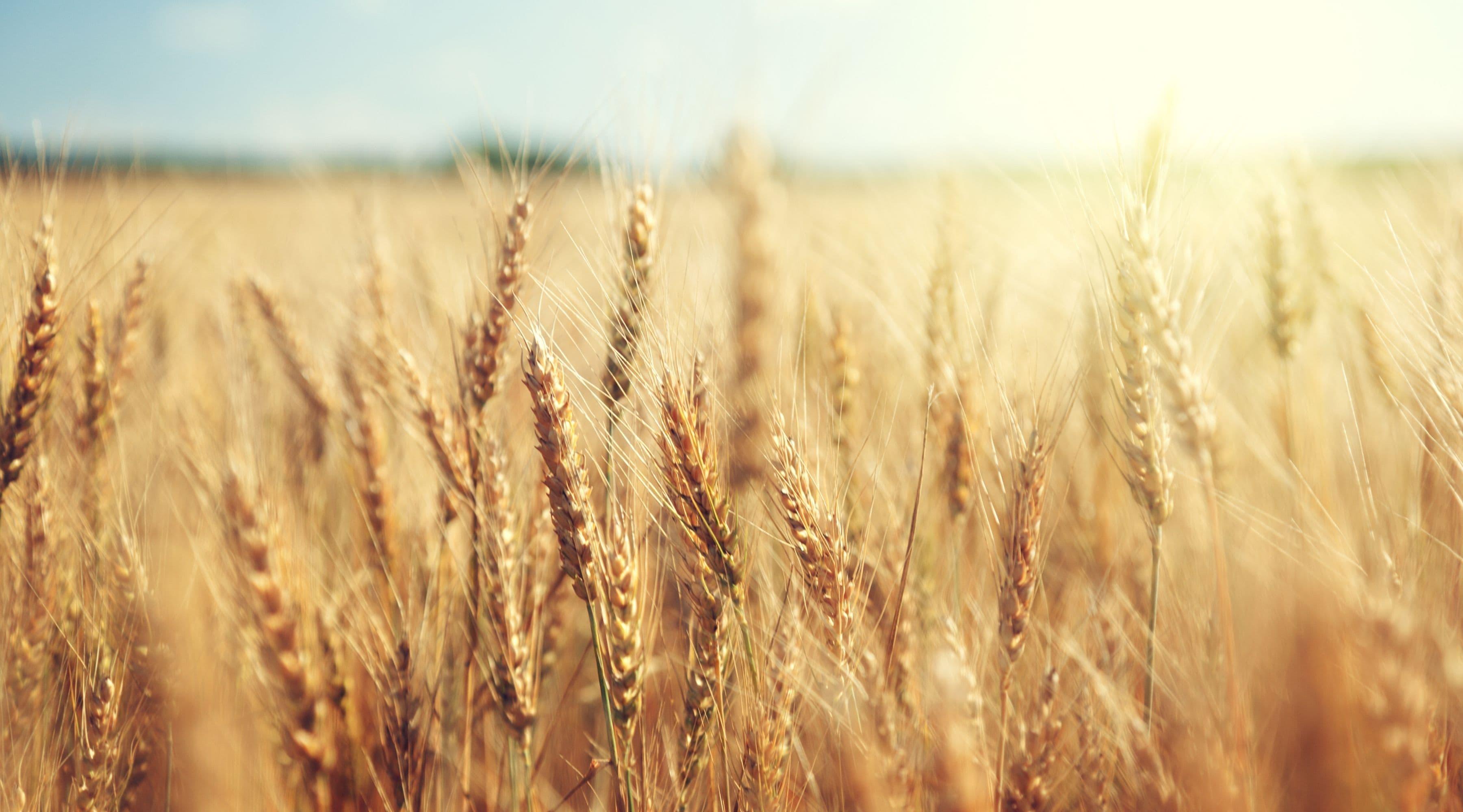 Glutenintolerans kan leda till näringsbrist – 7 vanliga brister